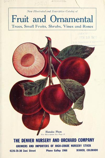 Image from object titled New illustrated and descriptive catalog of fruit and ornamental trees, small fruits, shrubs, vines and roses /