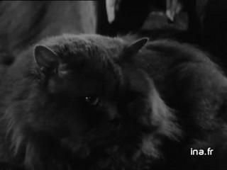 [Les chats et Charles Baudelaire]