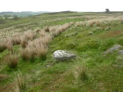 Beanley Moor 2