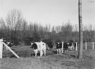 Landschap in Sint-Laureins-Berchem