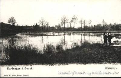 Marécages à Genck (Campine)
