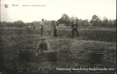 Genck Récolte des Pommes de Terre
