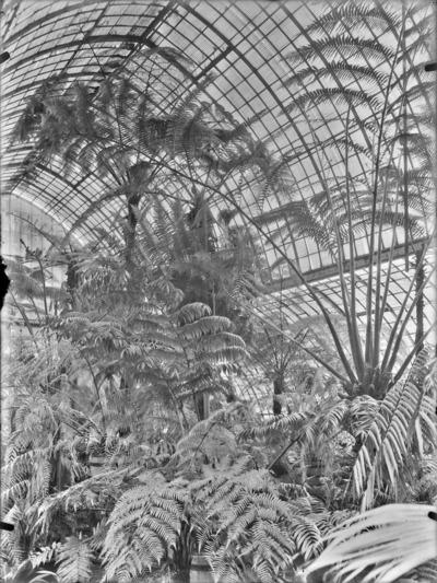 Jardin botanique de Bruxelles : Jardin d'hiver - fougères #0138