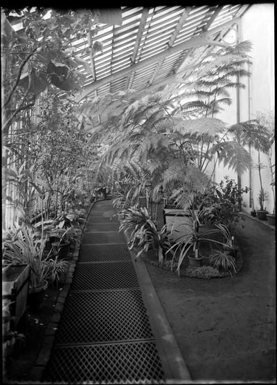 Jardin botanique de Bruxelles : Grande serre n° 4 du haut du Jardin : Fougères arborescentes #0031