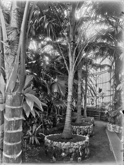 Jardin botanique de Bruxelles : Jardin d'hiver - fougères #0142