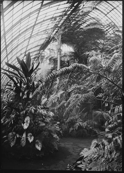 Jardin botanique de Bruxelles : Palais des fougères #0088