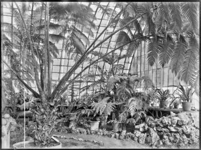 Jardin botanique de Bruxelles : Jardin d'hiver - fougères #0146
