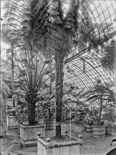 Jardin botanique de Bruxelles : Jardin d'hiver - fougères #1711