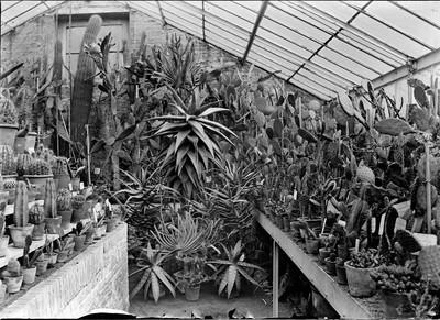 Jardin botanique de Bruxelles : Serre aux plantes grasses #0072