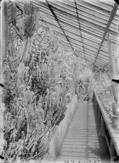 Jardin botanique de Bruxelles : Serre aux plantes grasses #0079