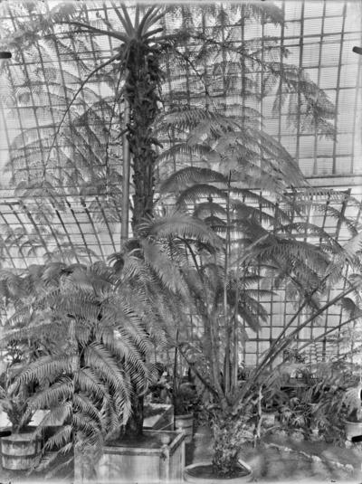 Jardin botanique de Bruxelles : Jardin d'hiver - fougères #1707