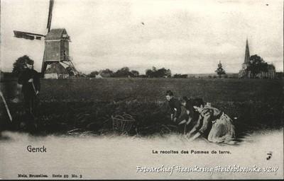 Genck La récolte des Pommes de terre