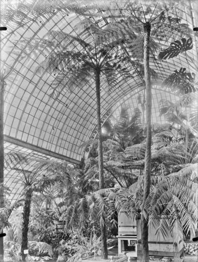 Jardin botanique de Bruxelles : Jardin d'hiver - fougères #0140
