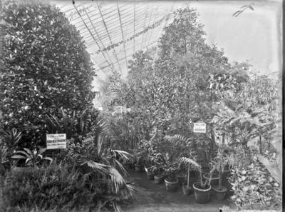 Jardin botanique de Bruxelles : Serre Froide : Groupe de plantes de l'Australie et de la Région Méditerranéenne #1724