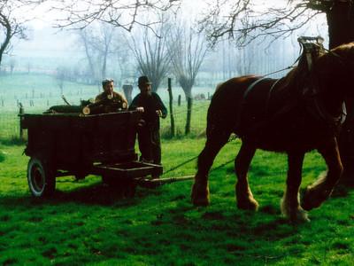 Brabants paard in Vollezele