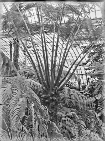 Jardin botanique de Bruxelles : Jardin d'hiver - fougères #1708