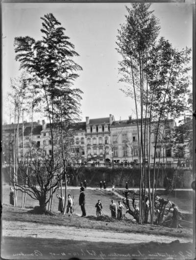 Jardin botanique de Bruxelles : Bambous et jardiniers #1716