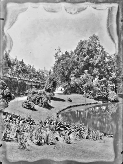 Jardin botanique de Bruxelles : Etang #1715