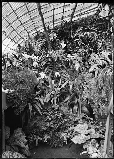 Jardin botanique de Bruxelles : Serre aux orchidées #0038