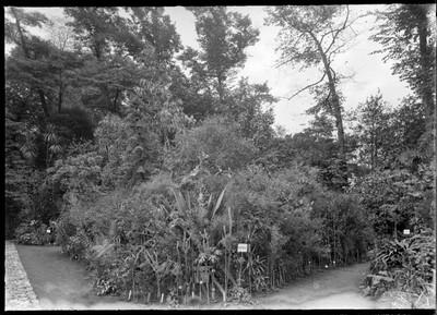 Jardin botanique de Bruxelles : Les groupes géographiques de plantes de serre froide : Australie - Chine - Nouvelle Zélande #0238
