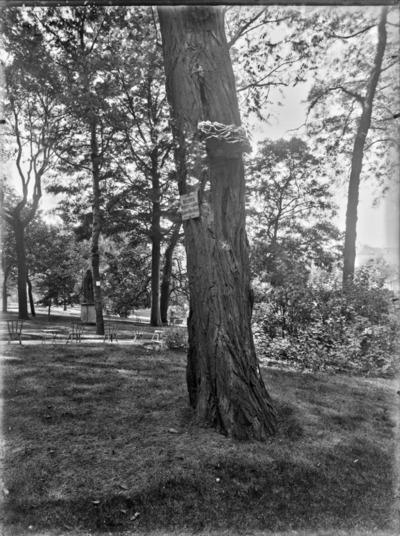 Jardin botanique de Bruxelles : Polypore sur Robinia pseudoacacia #1713