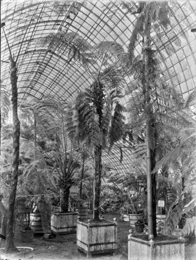 Jardin botanique de Bruxelles : Jardin d'hiver - fougères #0143