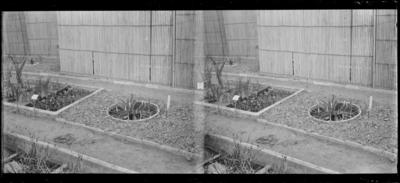 Jardin botanique de Bruxelles : Hélophytes #1354