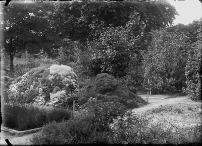 Jardin botanique de Bruxelles : Collection de plantes alpines #0077