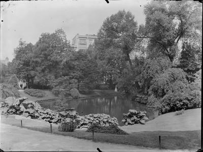 Jardin botanique de Bruxelles : Etang #0093