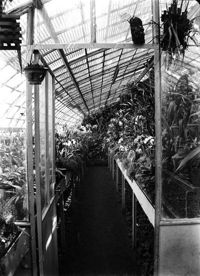 Jardin botanique de Bruxelles : Serre aux orchidées #0036