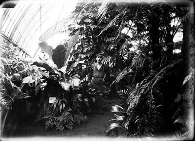 Jardin botanique de Bruxelles : Palais des fougères #0012