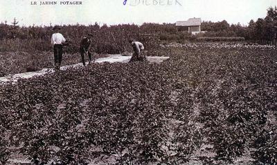Moestuin in Dilbeek