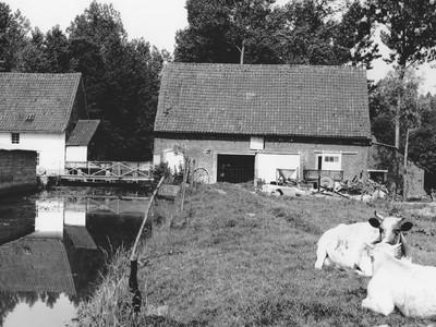 Wielantmolen in Tollembeek