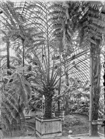 Jardin botanique de Bruxelles : Jardin d'hiver - fougères #1701