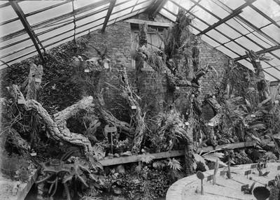 Jardin botanique de Bruxelles : Serre aux plantes grasses #0064