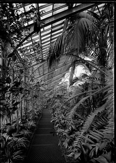 Jardin botanique de Bruxelles : Serre #0003