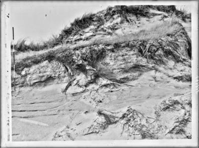 Fixation naturelle du sable par la végétation, dans le terrain expérimental du Jardin Botanique, à Coxyde #2435