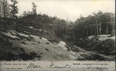 Genck (campine Limbourgeoise) - Chemin dans les bois