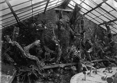 Jardin botanique de Bruxelles : Serre aux plantes grasses #0067