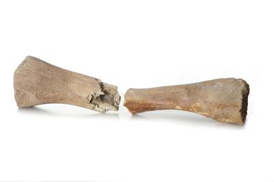 Mammoet beenderen