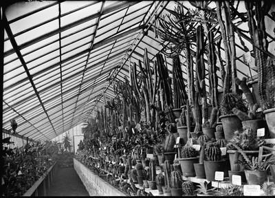 Jardin botanique de Bruxelles : Serre aux plantes grasses #0066