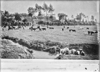 Pâturages de la ferme De Groote Kwinte, à Coxyde #2443