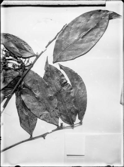 Détail d'une planche d'herbier #1590