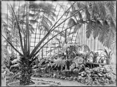 Jardin botanique de Bruxelles : Jardin d'hiver - fougères #1709