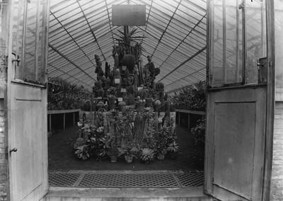 Jardin botanique de Bruxelles : Serre aux plantes grasses #0073