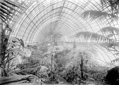 Jardin botanique de Bruxelles : Palais des fougères #0021
