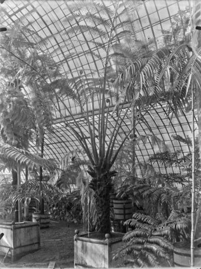 Jardin botanique de Bruxelles : Jardin d'hiver - fougères #1705