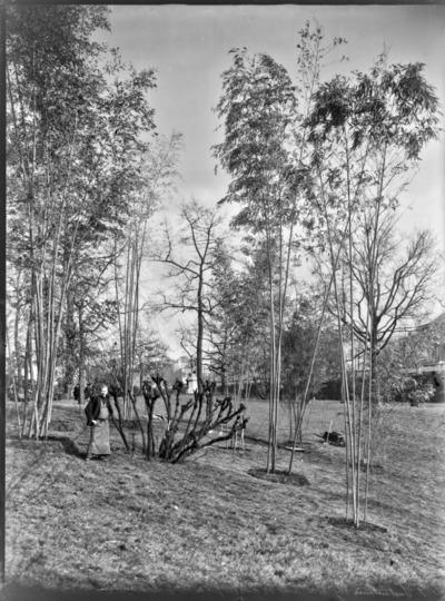 Jardin botanique de Bruxelles : Bambous et jardinier #1717