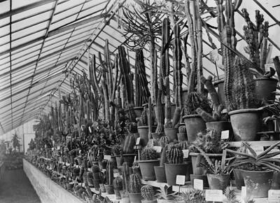 Jardin botanique de Bruxelles : Serre aux plantes grasses #0065