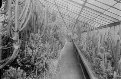 Jardin botanique de Bruxelles : Serre aux plantes grasses #0081